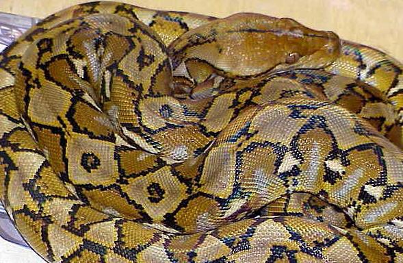 slangen en mensen